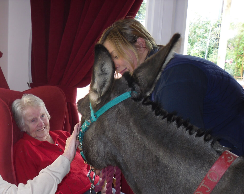 Daily Life at Home Donkey - Camelot Care, Somerset