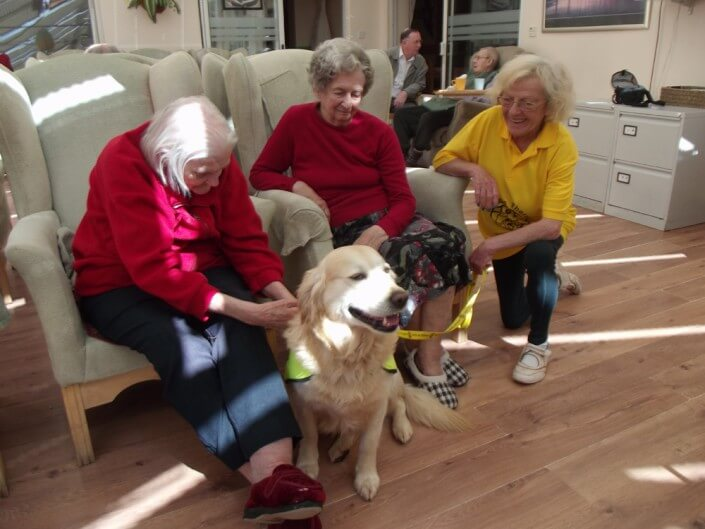 Daily Life At Home Guide Dogs - Camelot Care, Somerset